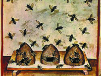 Beekeeping Depictions Date to 4,500 Years Ago