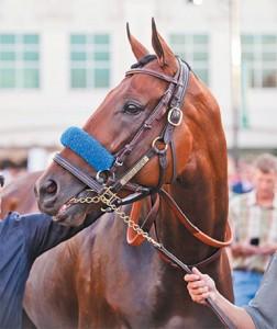 horse_may16
