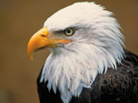 The Appraiser's Diary: American Eagle Emblem of Our Republic