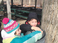 Maple Syrup Production An Invigorating Experience