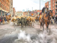 2020 National Western Stock Show & Rodeo